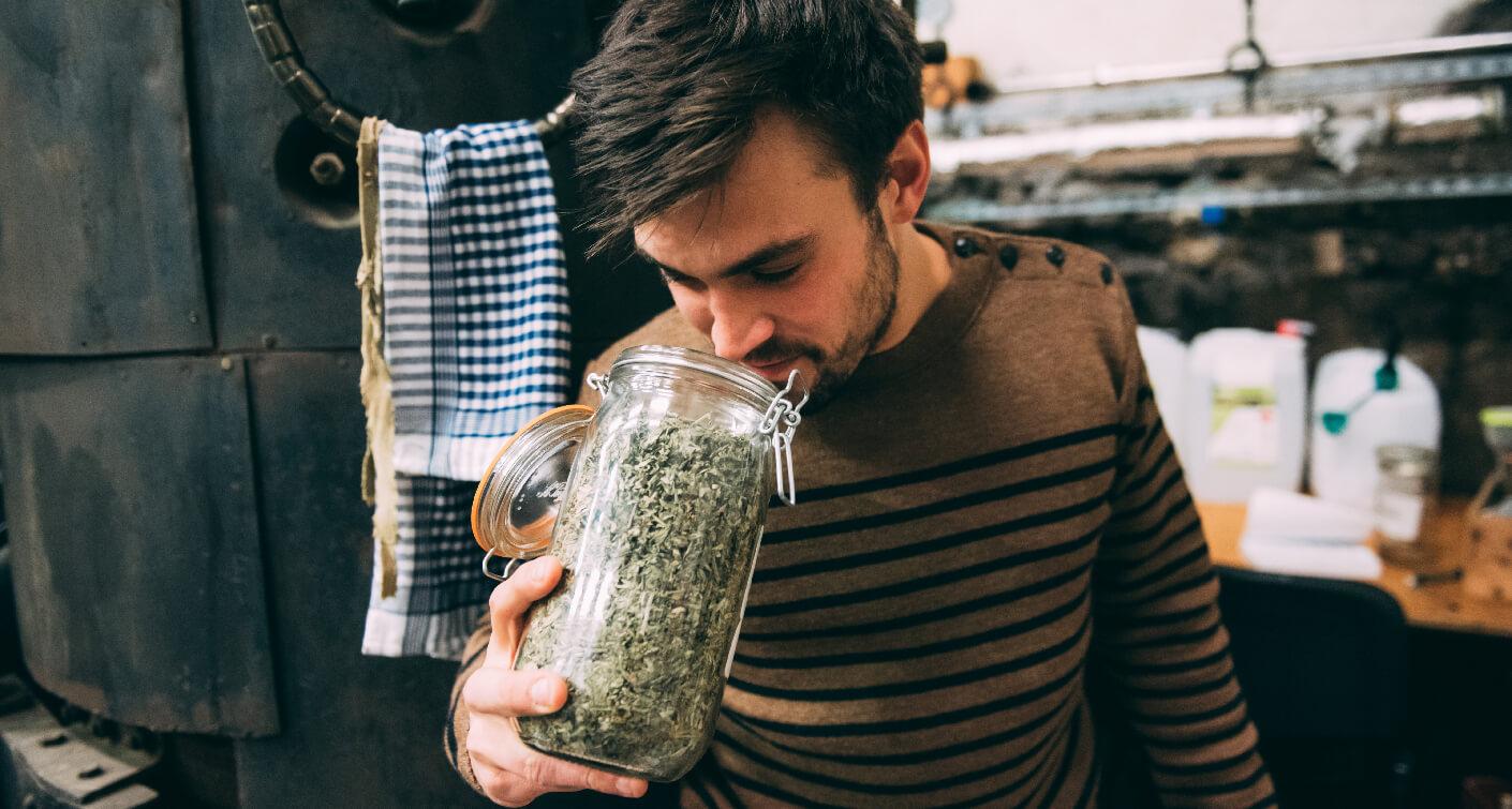 La botanique et le terroir du gin