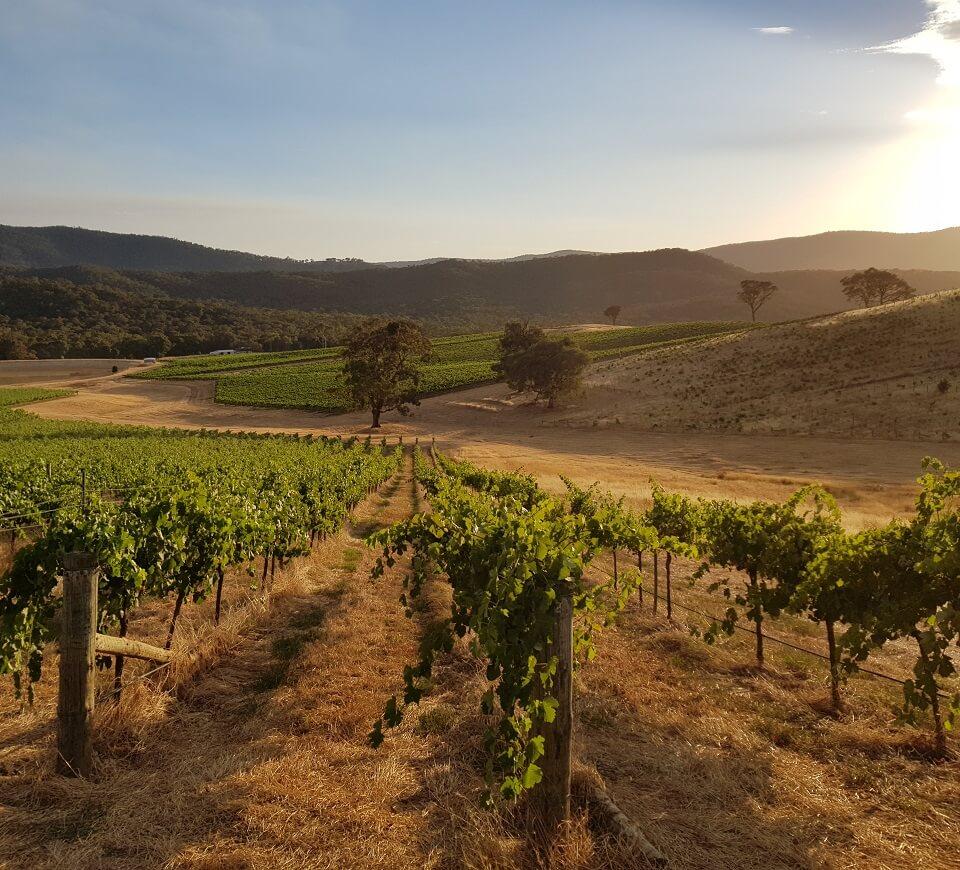 australian vineyard Domaine Tournon
