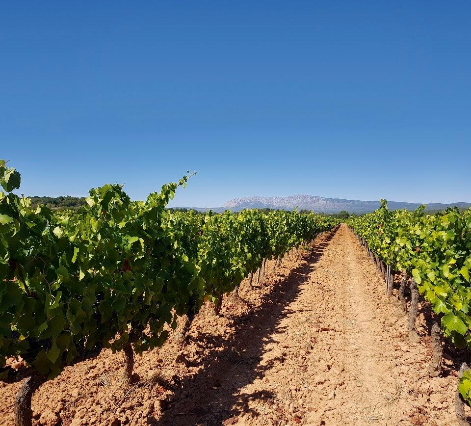 Vignes Château des Ferrages Provence