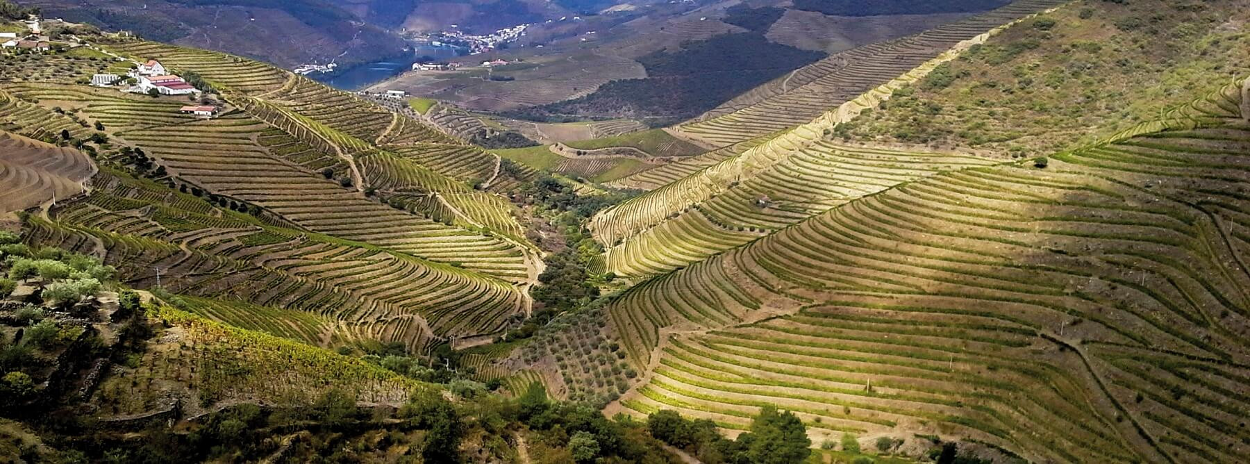 Portugal :  a traditional Douro 2019 vintage