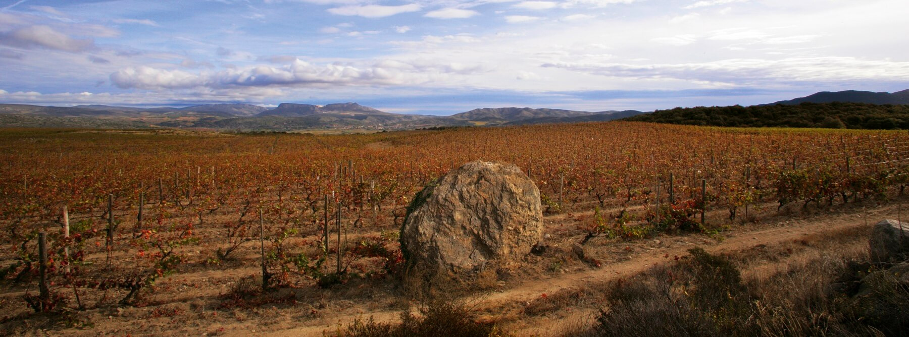 2019: A year of extremes in Roussillon