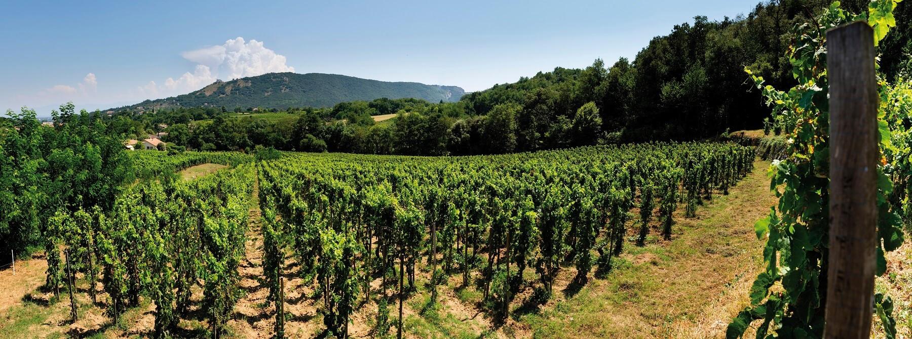 Les Vendanges 2019 En Vallee Du Rhone Un Millesime Hors Du Commun