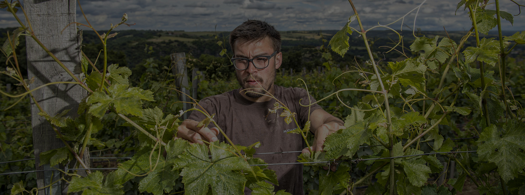 Maxime Chapoutier in La Combe Pilate vines